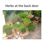Herbs at your back door