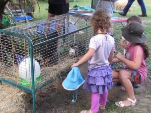Chickens at Permaculture Expo
