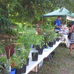 Plant Stall Permaculture Expo