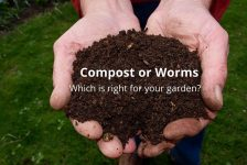 Compost or Worms?
